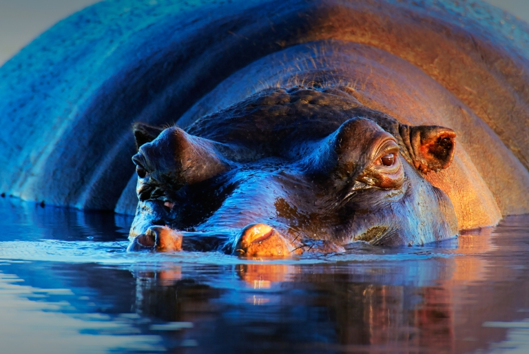 africa-south-africa-kruger-park-safari-hippo