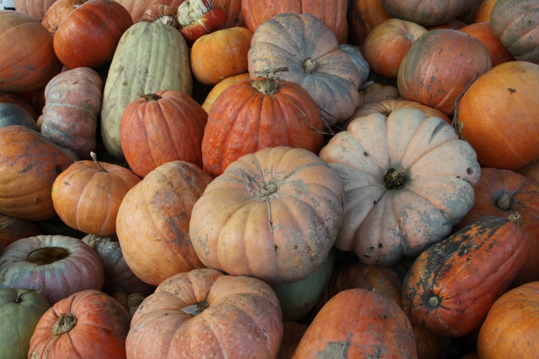 South-Africa-Robertson-Valley-Pumpkins.jpg
