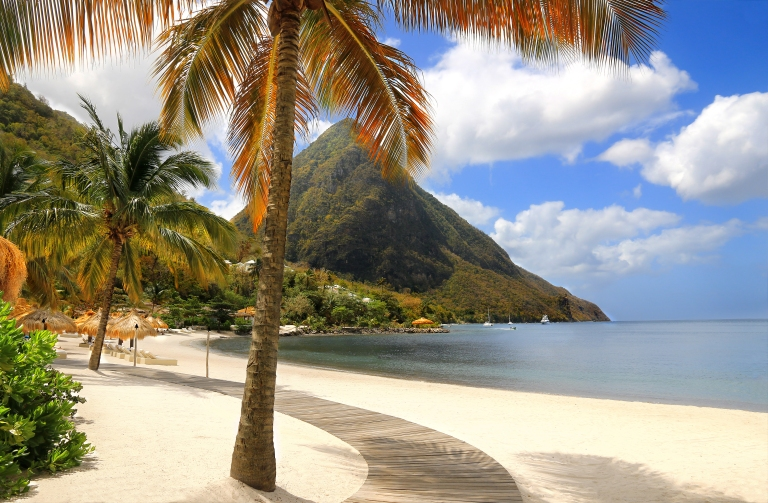 St Lucia-Beach-Palm