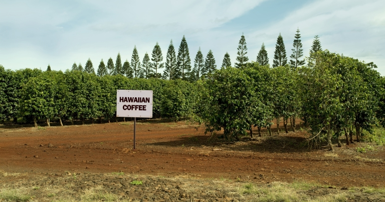 Hawaiian-Coffee-Farm.jpg