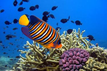 Hawaii-Reef-Yellow