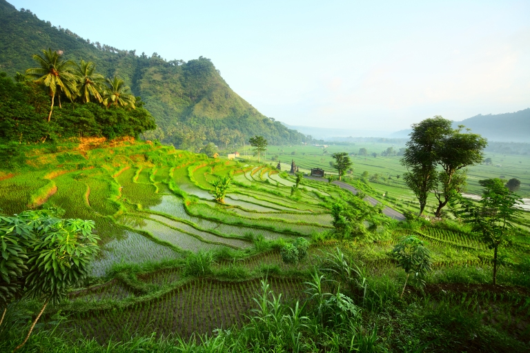 indonesia-bali-rice-fields-terraces-high-res.jpg