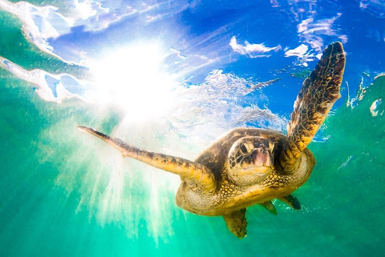 Hawaii-Sea Turtle.jpg