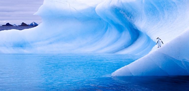 antarctica_penguin_iceberg_curve.jpg